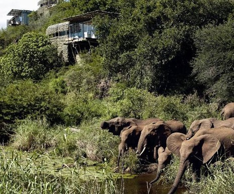 Güney Afrika Singita Kruger