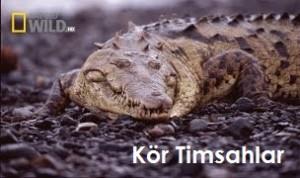 kor timsahlar belgeseli