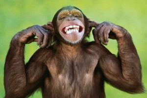 maymun türleri ve ırkları