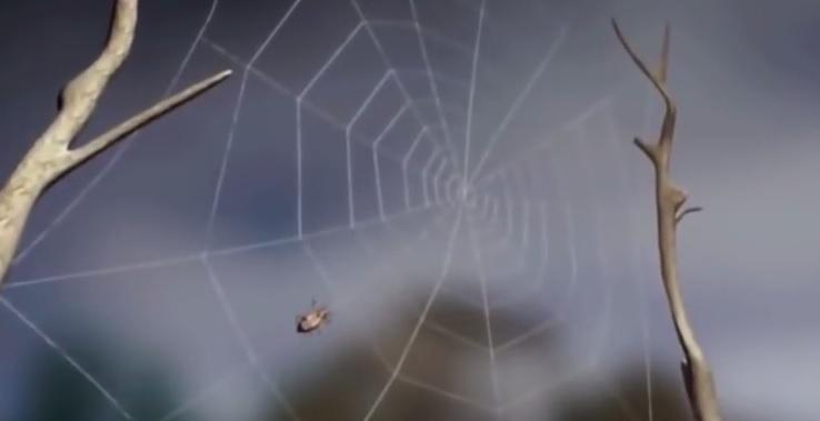 Örümcek ağları
