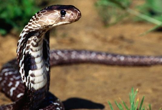 yılan resmi