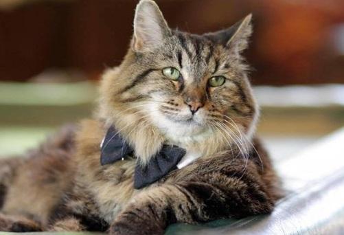yasli-kedi-mamasi